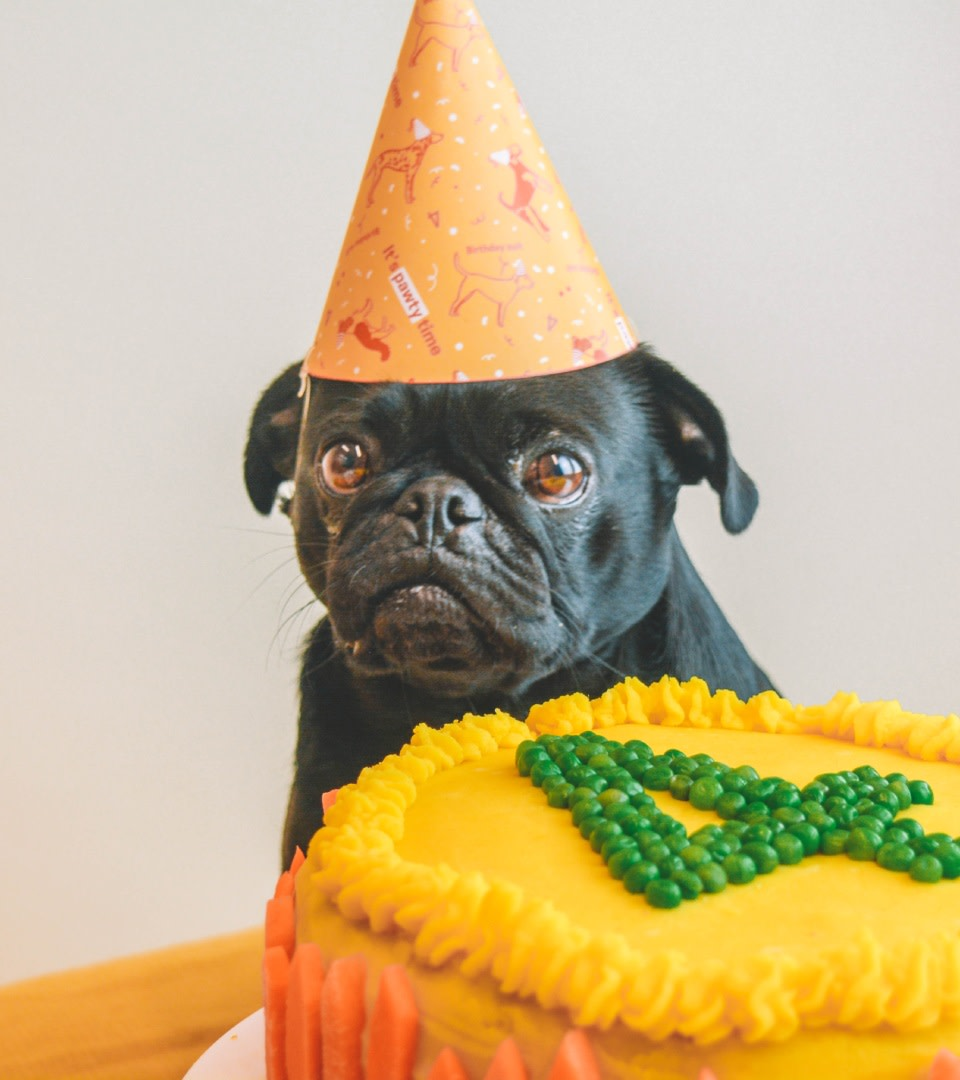 Surprising Butternut Box How To Make A Dog Friendly Birthday Cake Personalised Birthday Cards Cominlily Jamesorg