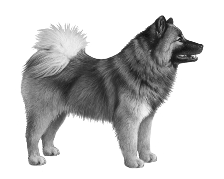 Eurasier B&W Small File