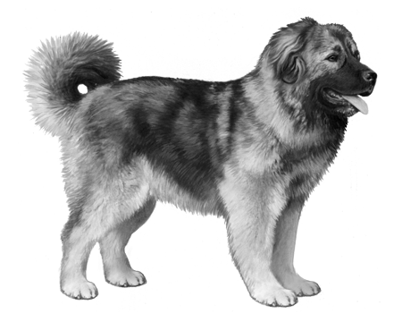 Caucasian Shepherd Dog B&W Small File