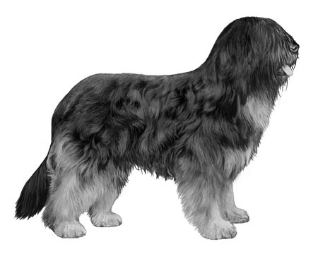 Portuguese Sheepdog B&W Small File