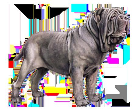 Neapolitan Mastiff Facts Wisdom Panel Dog Breeds