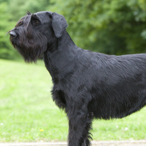Dog Breeds That Require A Muzzle Uk