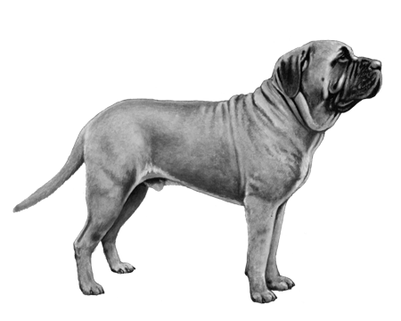 Mastiff Files - B&W