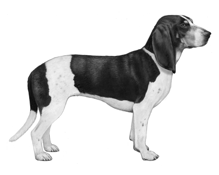 Small Swiss Hound B&W Small File