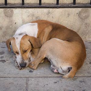 Mexican Street Dog 4