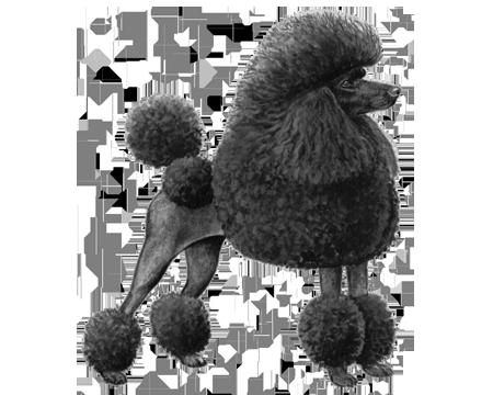 toy poodle wisdom panel