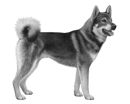 Swedish Elkhound B&W Small File