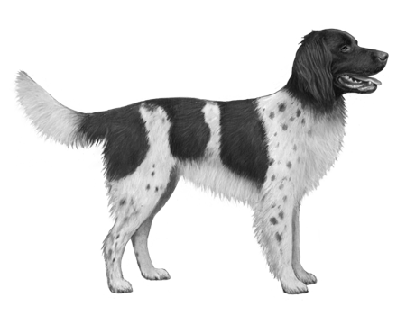German Longhair Pointer B&W Small File