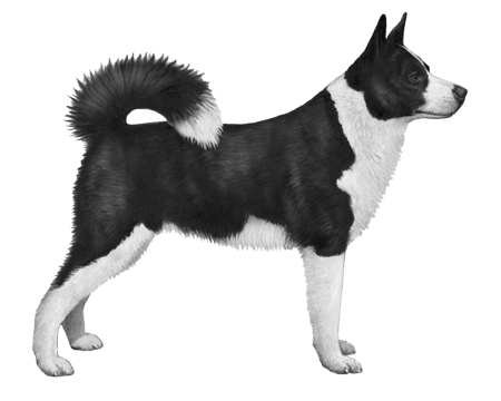 Karelian Bear Dog B&W Small File