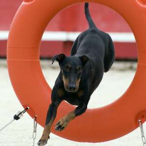 Dog Training Manchester Ct