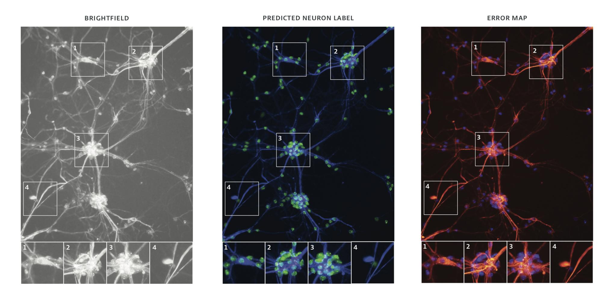 Neurons v3
