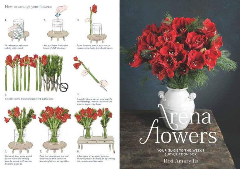 SUBSCRIPTION FLOWERS LEAFLET Red Amaryllis 1 Page 1 1024x.jpg?v=1609240998