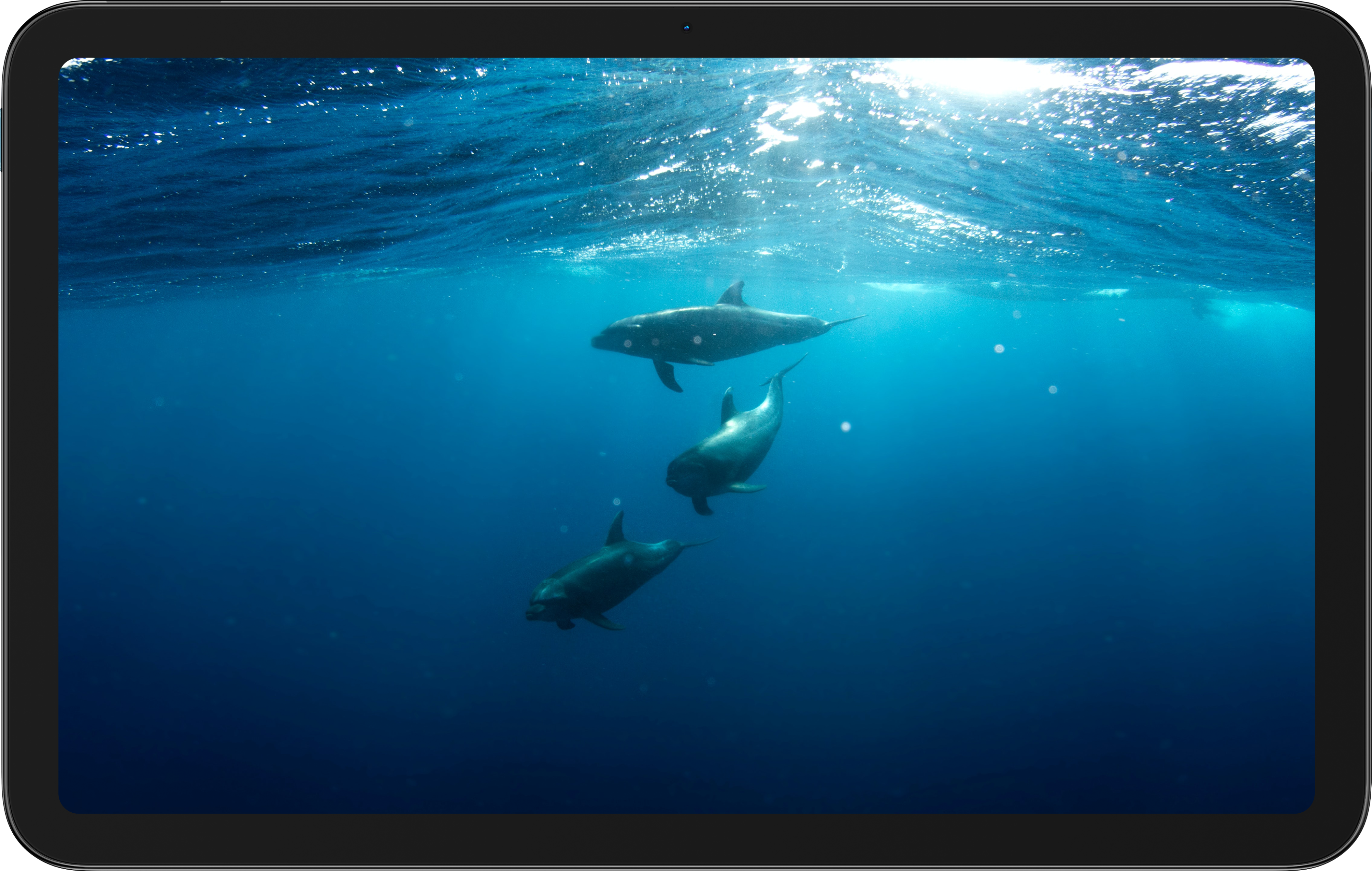 An image of dolphins displayed on the Nokia T20 tablet