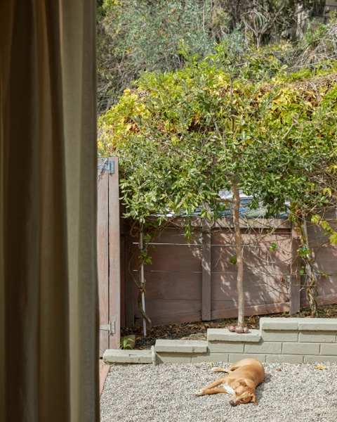 A sunny courtyard is ideal for pups and for entertaining.