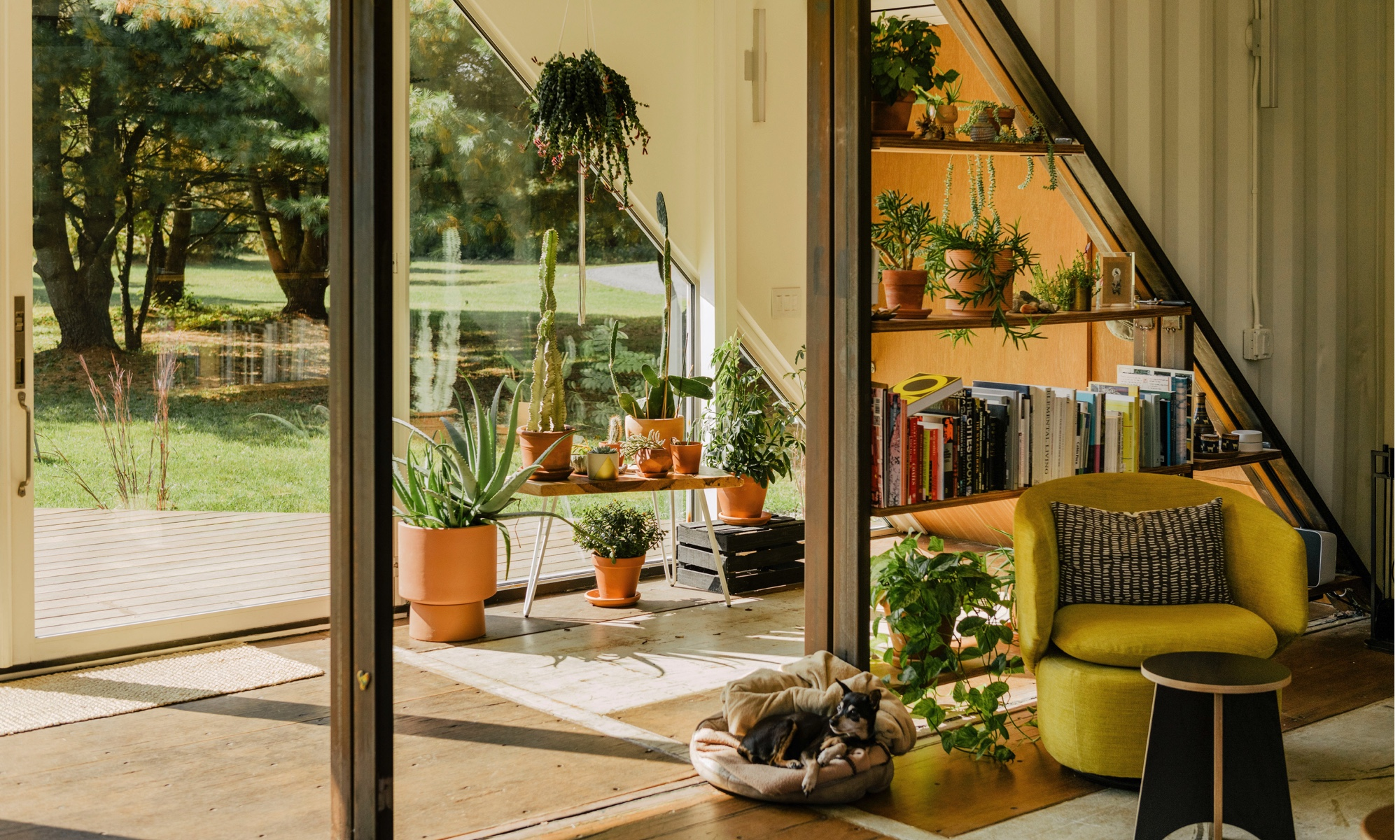 A large plant collection in a modern glass living space.
