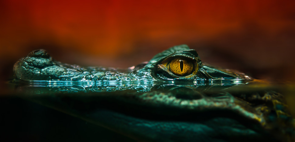 Blog - Microservices, Latency, and Alligators in the Pond