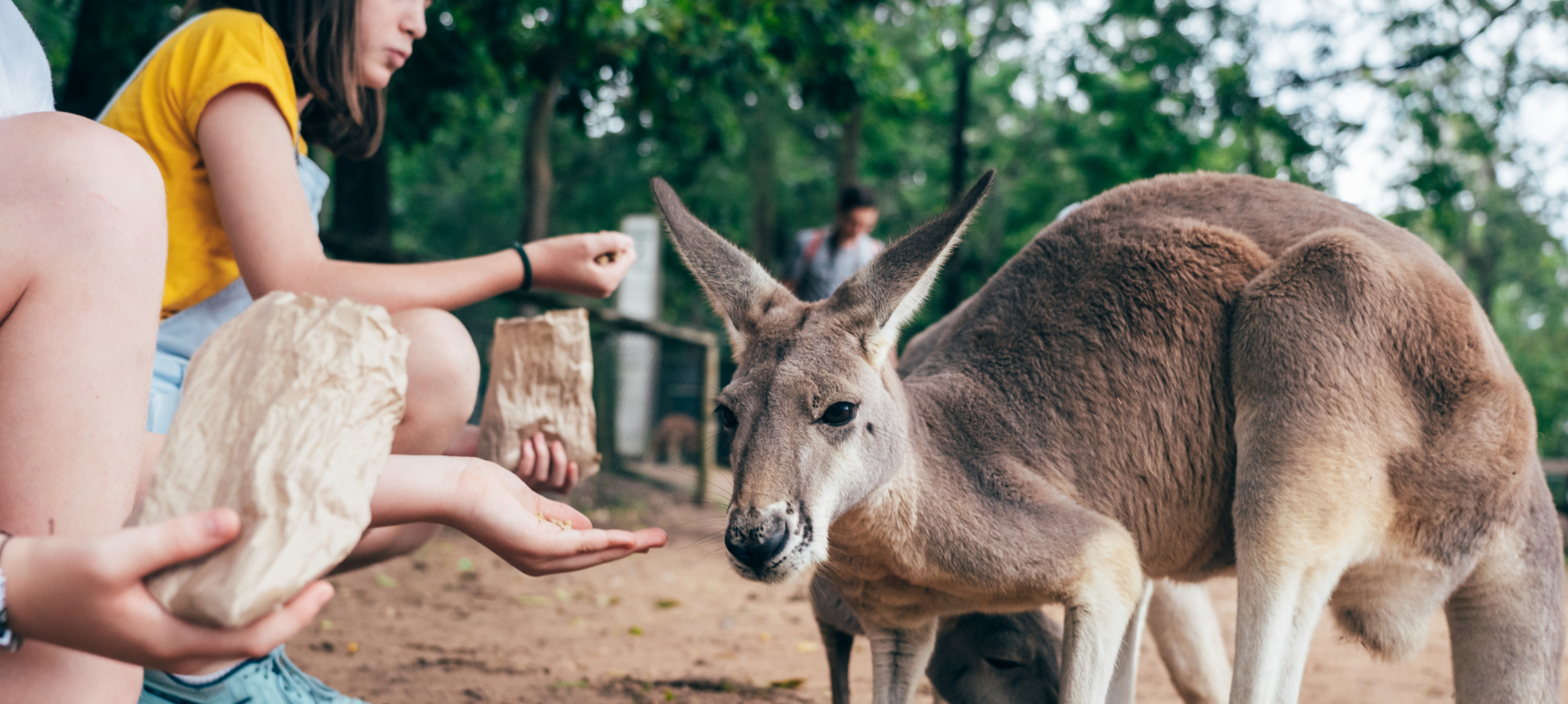 Lone Pine Koala Sanctuary Family Friendly