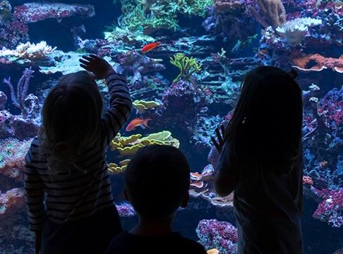 Loveland Aquarium