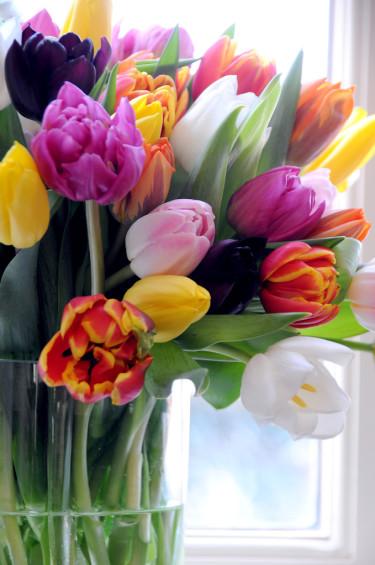 Tulpaner i olika färger i en tung glasvas ger ett härligt intryck! Foto: Blomsterfrämjandet