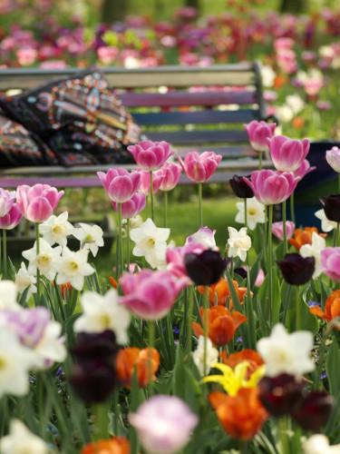 Rich Folklore. Foto: Blomsterfrämjandet/IBC.