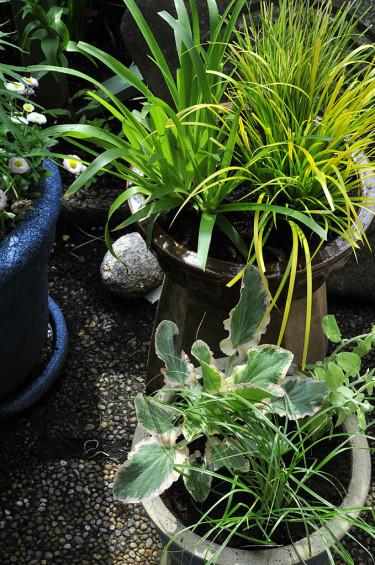 Nyplanterade krukor i olika skepnader. Foto: Bernt Svensson
