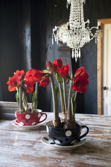 Arrangemang med röda amaryllisFoto: Blomsterfrämjandet