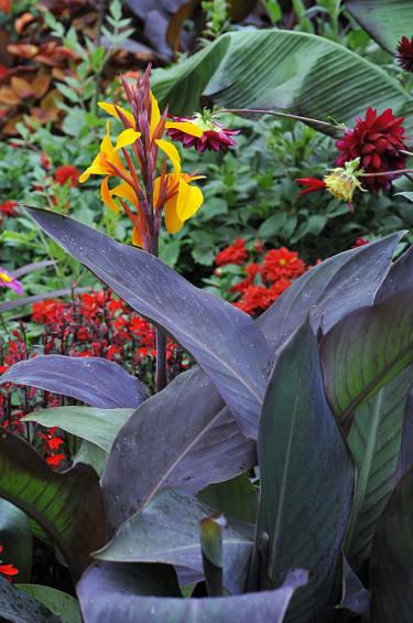 Färgstarka växter i Cosmopolitan. Foto: Bernt Svensson