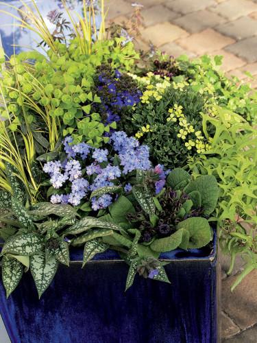 Vårflirtskombination 2. Foto: Blomsterfrämjandet, Hörnhems.