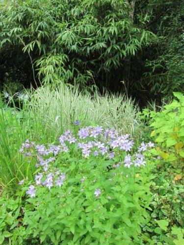 I bakgrunden åretruntgröna växter som bildar en fond åt perennerna framför.