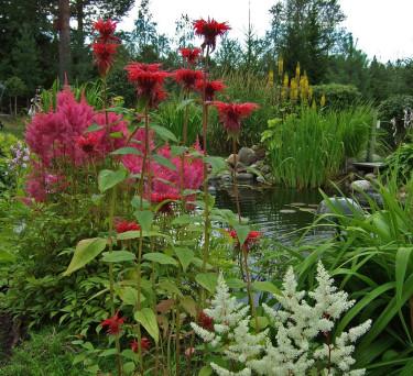 Så här vill Elisabet Tannfors ha det i sin trädgård. Vackert, inte sant!