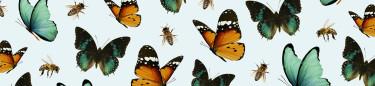 Bi- & Fjärils vänliga fröer