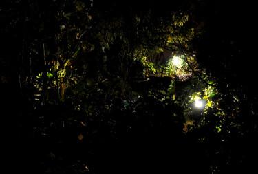 Hemlighetsfulla ljusglimtar i buskarna Foto och arr: Sylvia Svensson