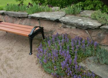 Kallmur med stenpartiväxter i Göteborgs Botan. Foto: Sylvia Svensson