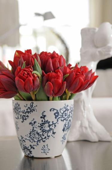 På Alla hjärtans dag väljer vi tulpaner i buketten. Alla hjärtans tulpaner 'Abba'.