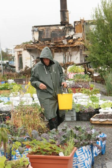 Bilden kommer från organisationen Stadsjords grönsaksodlingar på gamla industritomter i Göteborg.