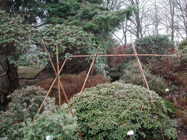 Stödpinnar för skyddväv. Foto: Sylvia Svensson