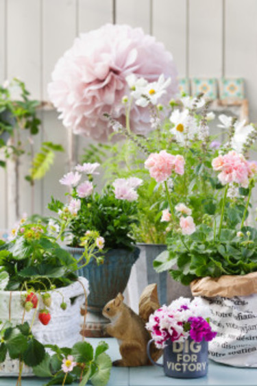 Milda pasteller tilltalar ögat.  Foto: Blomsterfrämjandet/Anna Skoog