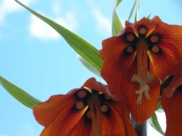 "I Holland har kejsarkronan fått smeknamnet ""stinkande liljan""."