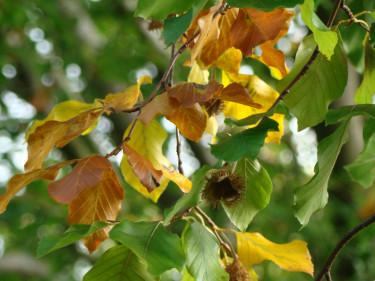 Varför ändrar löven färg till gult och rött på hösten? Foto: Katarina Kihlberg