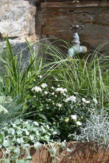 Mix av prydnadsgräs och sommarastrar. Foto: Blomsterfrämjandet
