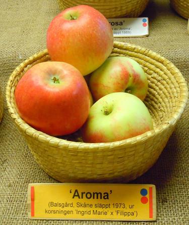 'Aroma'. Foto: Sylvia Svensson