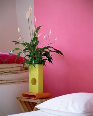 Fredskalla,  _Spathiphyllum_. Fotograf: Flower council of Holland.