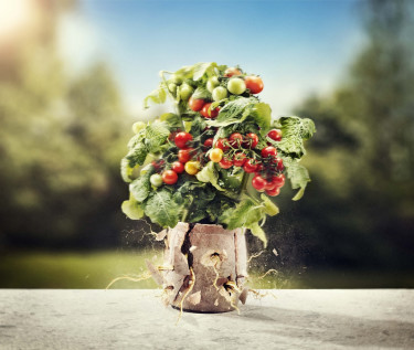 I morgon öppnar Trädgårdsmässan Nordiska Trädgårdar - ett säkert vårtecken för många