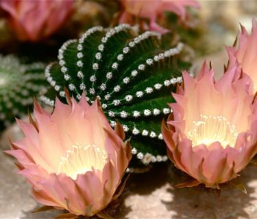 Exotisk och svensk flora samsas i vackra Botaniska trädgården i Lund.