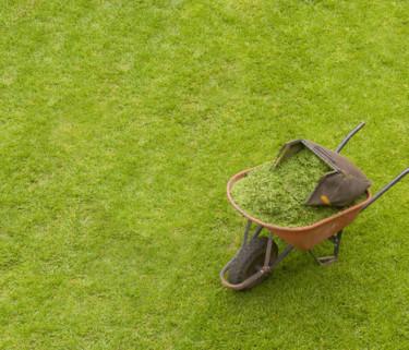 En gräsmatta har många önskemål att fylla. Springande hundar, lekande barn och inte minst ska den vara vacker att se på. Tänk efter före du anlägger din gräsmatta med hjälp av gräsguiden på Odla.nu.