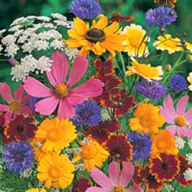 Mix av av ettåriga blommorna, passar till fjärilar och bin