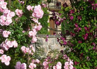 Rosor och klematis möter upp vid Engsholms slott.