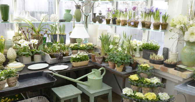 Claus Dalby väljer att odla i krukor i sina växthus. Kompositionen av växter, redskap och prydnadssaker blir till rena konstverken.