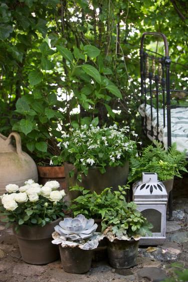 Gråa toner är nytt och trendigt, blandat med vita toner blir det fräscht och annorlunda. Foto: Floradania