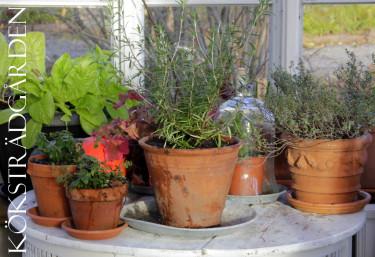 Örter i växthuset